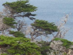_Two_Trees_Ocean