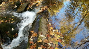 Leaves_In_Stream_&_Flowing_Water_TWO
